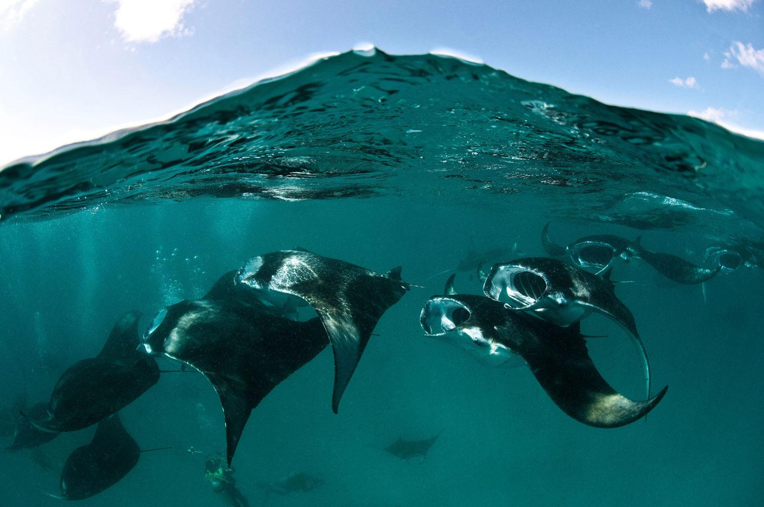 daiving_na_Maldivah