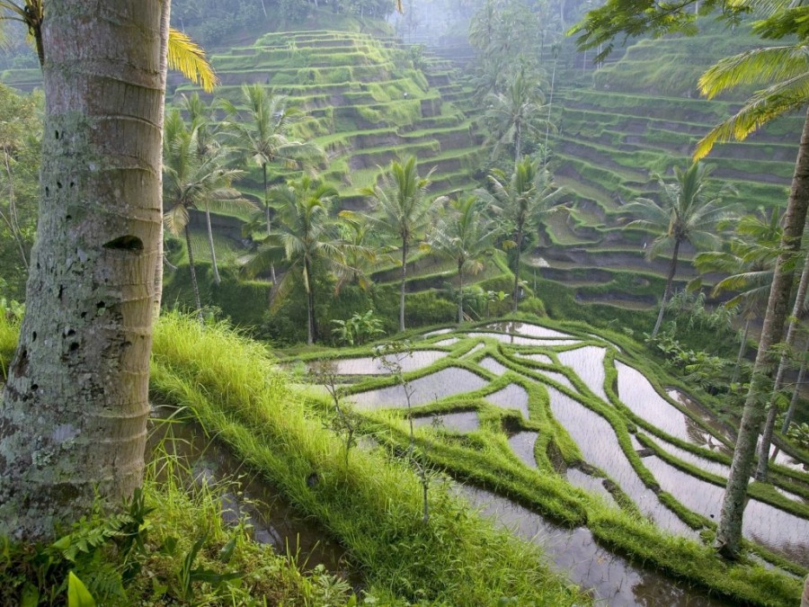 world_asia_terraced_rice_paddies_ubud_area_bali_indonesia_merci.travel