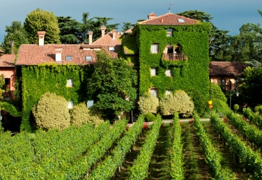 The vineyards and  L'Abereta Relais & Chateaux in Erbusco